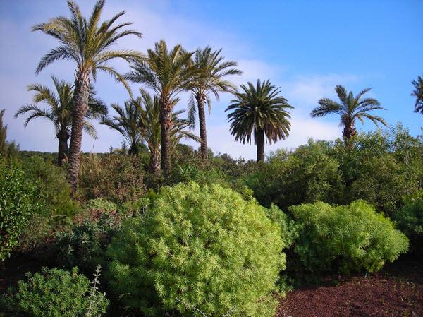 Visiter le jardin botanique de barcelone for Jardin en espagnol
