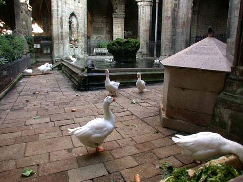 Les oies, gardiennes du cloître
