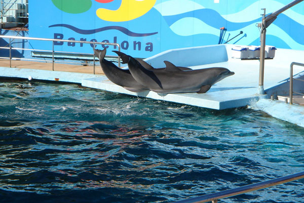 Spectacle de dauphins