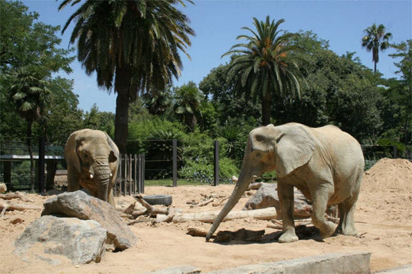 elephants zoo