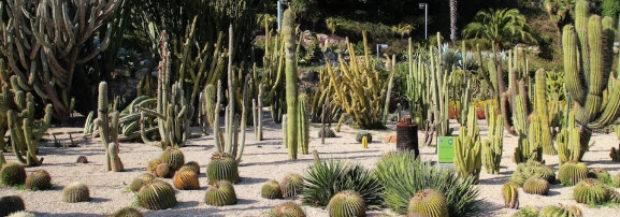 Promenez vous dans le parc des Cactus sur la montagne de Montjuic